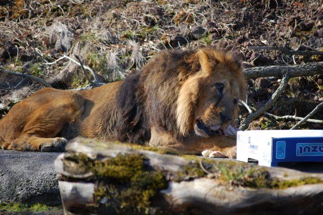 zoo i Sjælland Vembvej 17